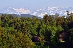 Wald und die Schweizer Alpen Stockfotografie