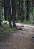 Wald und ein Vogel Lizenzfreies Stockfoto