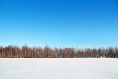 Wald und Feld mit weißem Schnee und blauem Himmel Stockbild