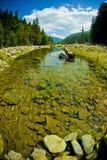 Wald und Fluss Lizenzfreie Stockfotos