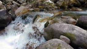 Wald und Fluss in den Bergen stock video