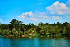 Wald und Fluss Grren Stockbilder