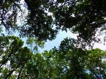 Wald und Himmel Lizenzfreie Stockfotografie