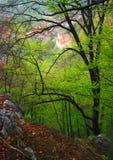 Wald-und Kleie-Schloss stockfoto