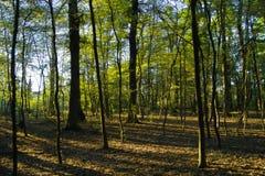 Wald und Leuchte Lizenzfreie Stockfotografie