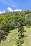 Wald und lokalisierter Baum an einem sonnigen Tag Lizenzfreies Stockfoto