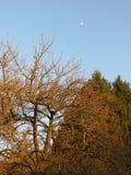 Wald und Mond lizenzfreie stockbilder
