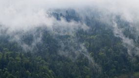 Wald und nebel Stock Photo