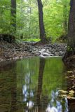 Wald und Nebenfluss Lizenzfreie Stockfotografie