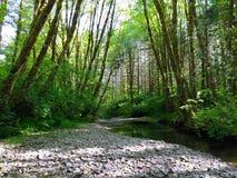 Wald und Nebenfluss Stockfoto