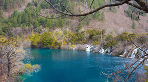 Wald und See lizenzfreie stockfotografie
