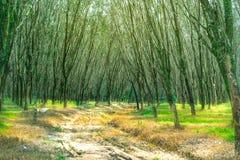 Wald- und Sonnenlicht lizenzfreies stockbild