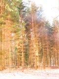 Wald und Sonnenstrahlen stockbilder