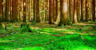 Wald- und Sonnenstrahlen Stockfotos