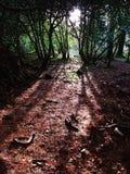 Wald- und Sonnenstrahlen Stockbild