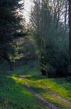 Wald- und Waldansicht Lizenzfreies Stockbild