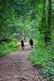 Wald und Wanderer Stockfotos