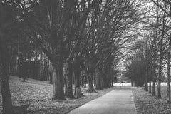 Wald und Weg Stockfotografie