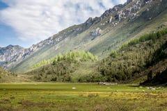 Wald und Wiese in einem Tal Lizenzfreie Stockfotos