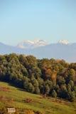 Wald und Wiese im Hintergrund der felsigen Berge lizenzfreie stockfotografie