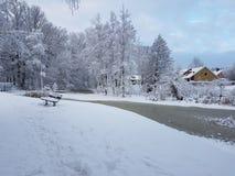 Wald und Wintersonne Lizenzfreie Stockfotografie