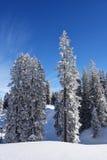 Wald und Wintersonne Stockbild