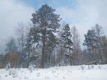 Wald und Wintersonne Lizenzfreies Stockfoto