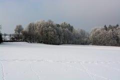 Wald und Wintersonne Stockfoto
