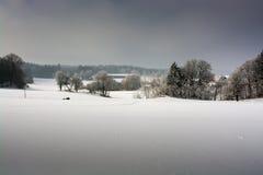 Wald und Wintersonne Lizenzfreie Stockfotos