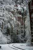 Wald und Wintersonne der erste Schnee im Wald Stockfotografie
