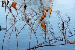 Wald und Wintersonne See Stockfotografie