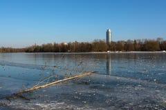 Wald und Wintersonne See vögel Stockfoto