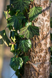 Wald und Wintersonne stadt Lizenzfreie Stockfotos