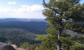 Wald unter Berg Lizenzfreies Stockbild