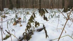 Wald unter Schnee stock video footage