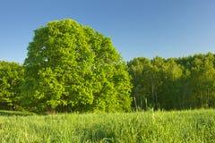 Wald unter Sonnenlicht Lizenzfreie Stockfotografie