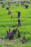 Wald verwüstet stockfotos
