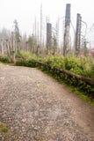 Wald verwüstet durch Borkenkäferplage in Sumava-Bergen stockbild