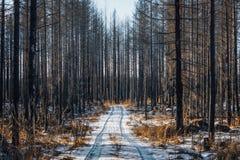Wald verwüstet durch Feuer stockfotos