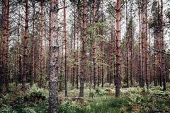 Wald voll von Bäumen stockfoto