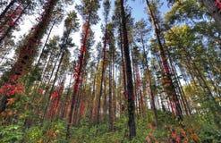 Wald voll von Farben Stockfoto