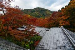 Wald von Ahornbäumen in der Fallfarbe, die über Tempeldachspitzen während des Herbstes in Kyoto, Japan steigt stockfotos