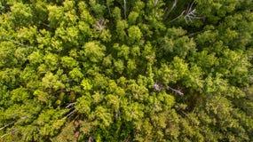 Wald von der Draufsicht Lizenzfreie Stockfotos