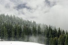 Wald von der Fichte im Nebel und im Schnee Lizenzfreie Stockfotografie