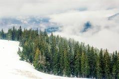 Wald von der Fichte im Nebel und im Schnee Lizenzfreies Stockfoto
