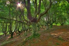 Wald von Gorbeia Stockfotos