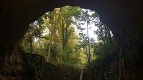Wald von innen gesehen von einer Höhle stockfotos