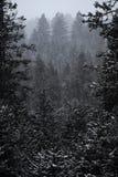 Wald von Kiefern beim Winter Snowy-Sturm-Schnee-Flocken-Fallen Stockbild