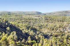 Wald von Lagrasse Stockbilder