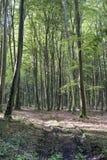 Wald von Longpont (Picardie) Lizenzfreie Stockfotos